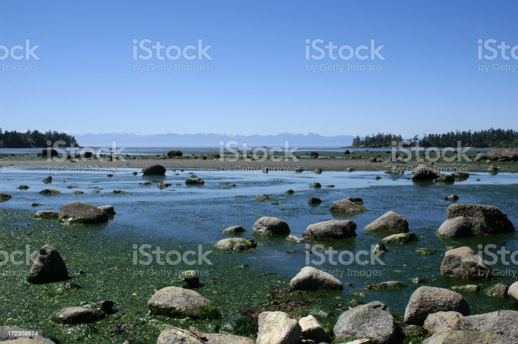 Low Tide on San Juan Island, WA. royalty-free stock photo