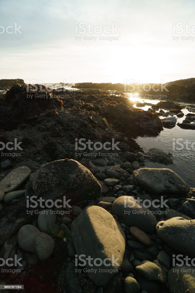 low tide tide pools exposed at sunset zbiór zdjęć royalty-free