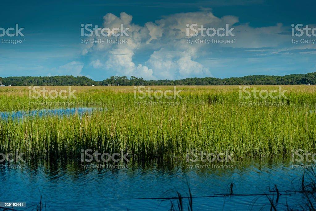 Lowcountry Marsh, South Carolina stock photo