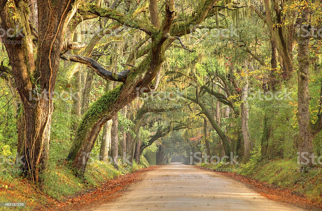 Lowcountry Road near Charleston, South Carolina stock photo