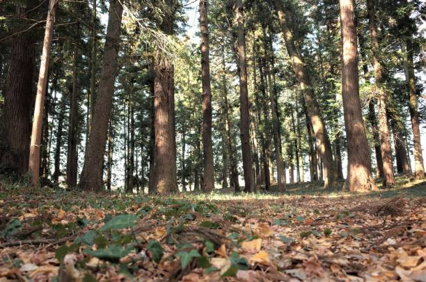 Lower angle forest stock photo