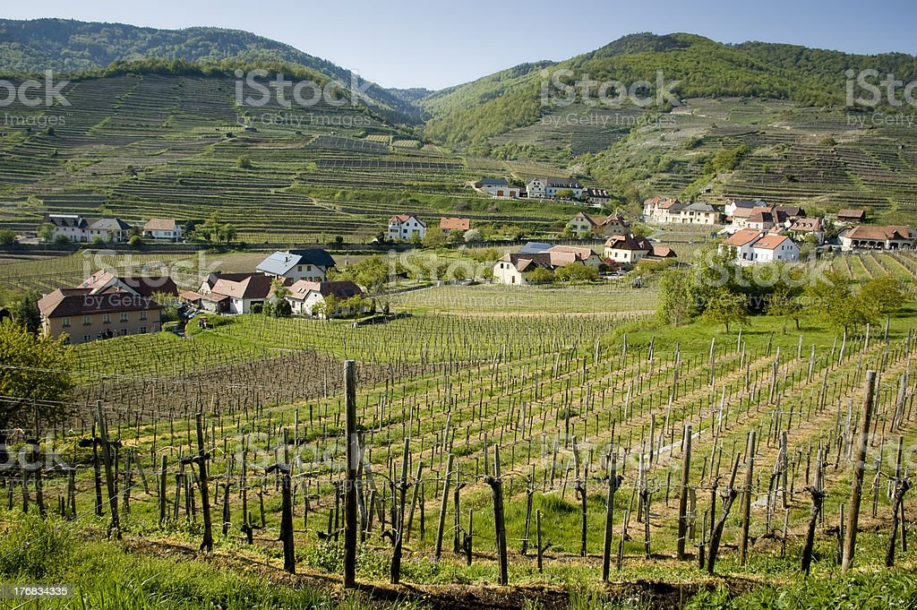 Lower Austria Wine-Growing District royalty-free stock photo