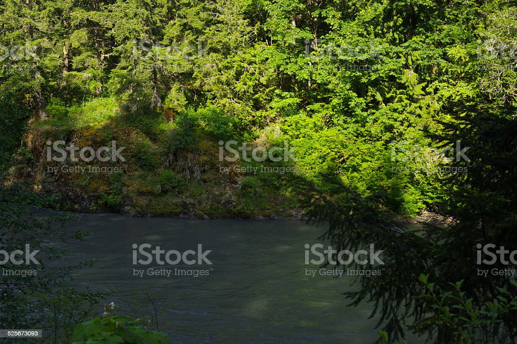 Lower Elwha River Green stock photo