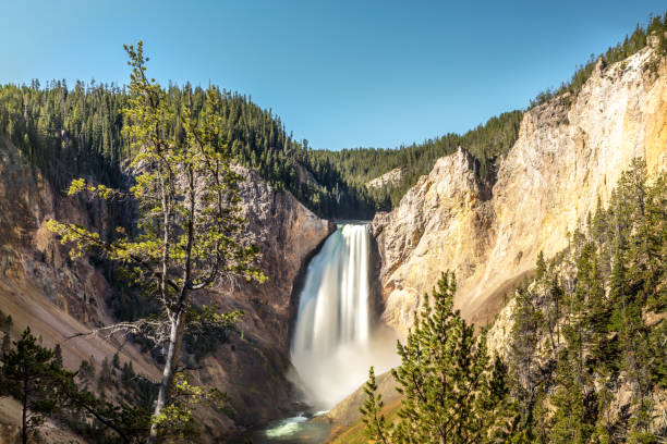 Lower Falls of the Yellowstone River in Yellowstone National Park stock photo