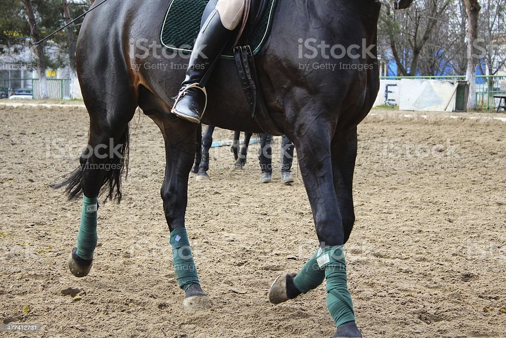 Lower part of black horse body royalty-free stock photo