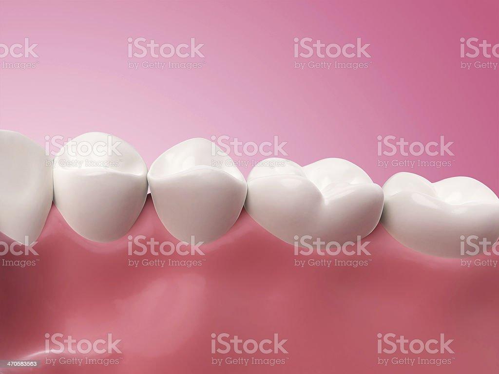 lower teeth stock photo