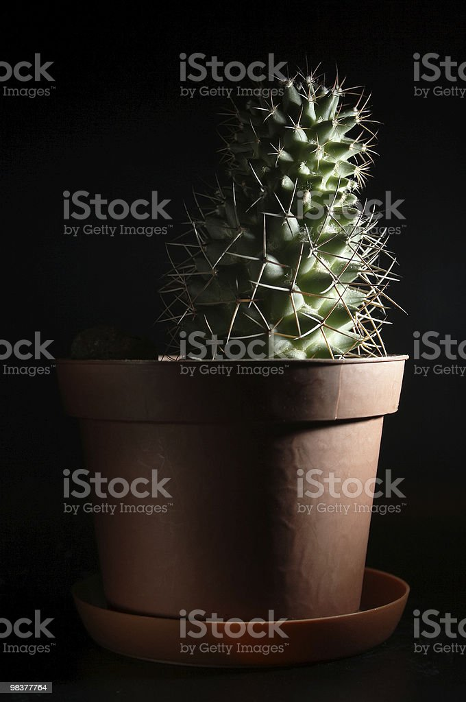 Low-key shot of cactus royalty-free stock photo
