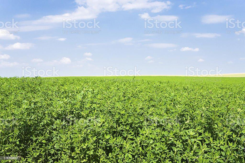 lucerne under blue sky stock photo