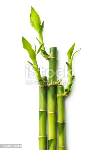 bamboo,leaf,cut out,nature,plant