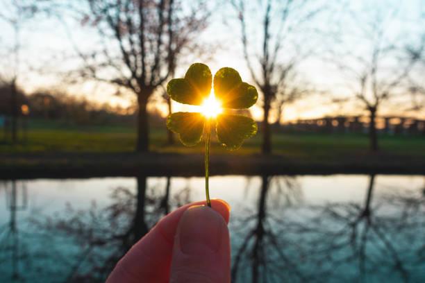 amuleto de la suerte trébol mágico de cuatro hojas - buena suerte fotografías e imágenes de stock