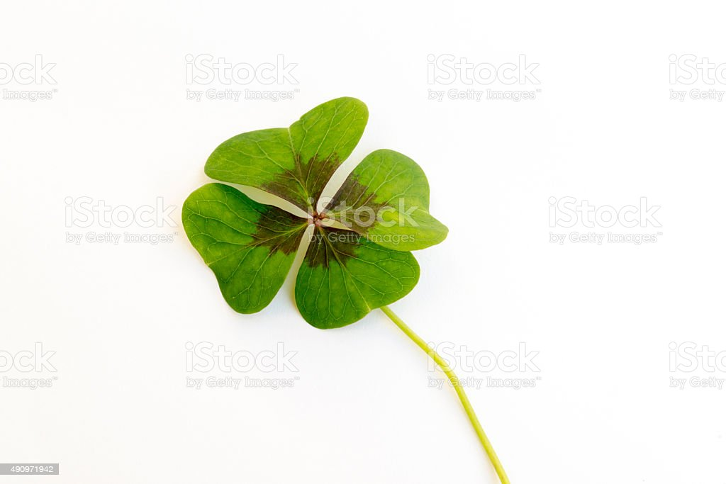 Lucky clover on a white background stock photo