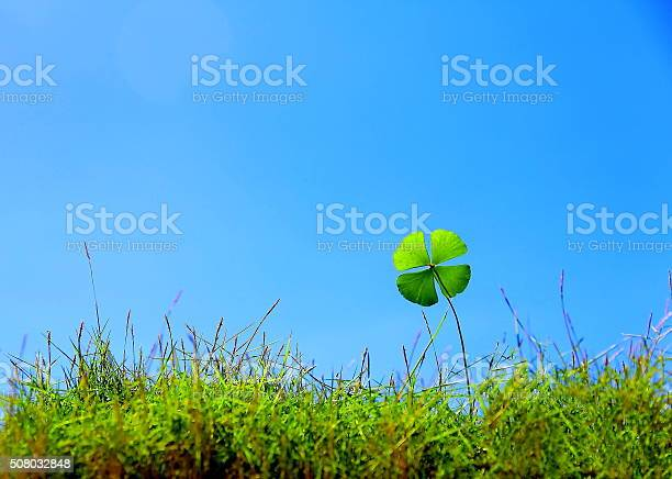 Lucky clover on grass picture id508032848?b=1&k=6&m=508032848&s=612x612&h=ga8attmsnifm7zsox5wkb qcovzkodjomprsfztqzu4=