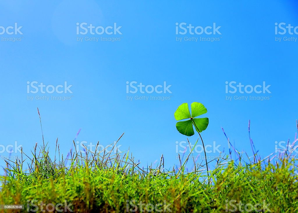 Sorte trevo na grama - foto de acervo