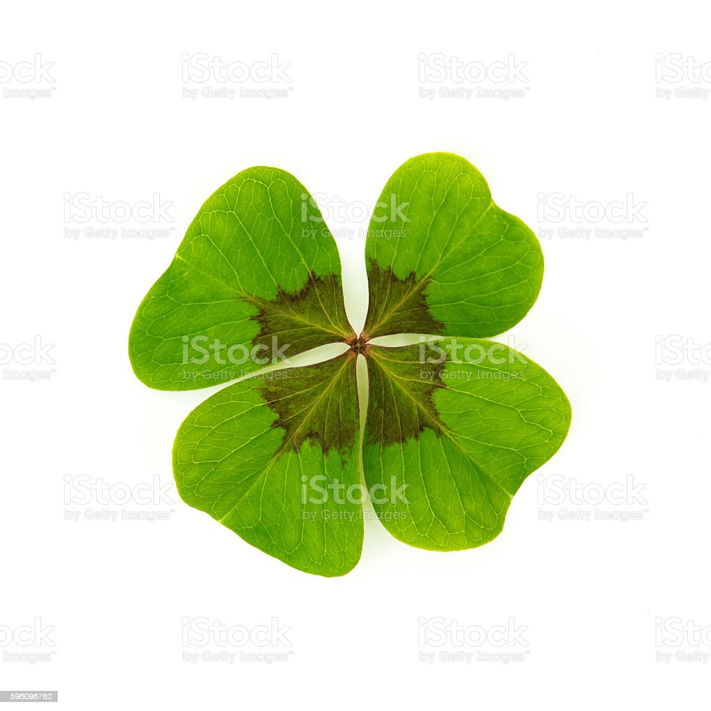 Lucky clover on white background royalty-free stock photo