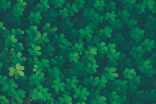 istock Lucky clover vintage background 1134266862