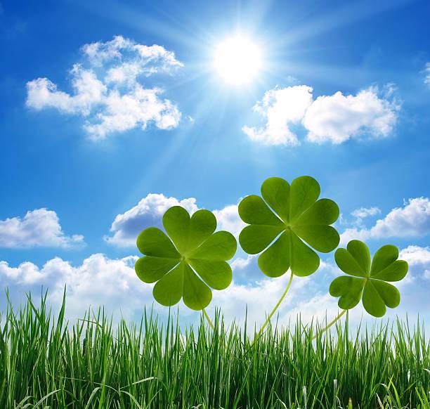 lucky clovers e grama - boa sorte - fotografias e filmes do acervo