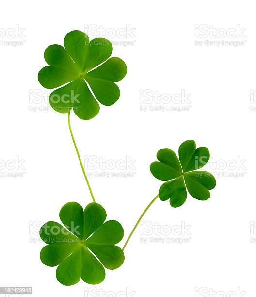 Lucky clovers isolated on white background picture id182423945?b=1&k=6&m=182423945&s=612x612&h=hx2m3kxu4usfznynr d6rehale3z7wp6um8fattgdxq=