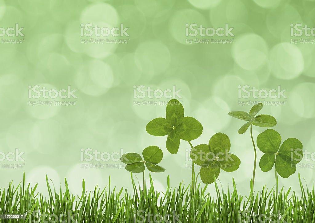 Lucky Clovers. stock photo