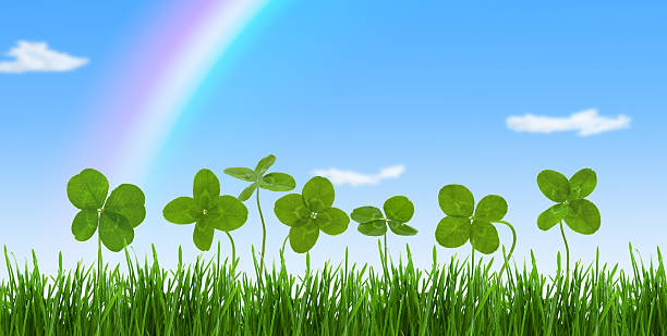lucky clovers. - happy st. patricks day stock photos and pictures