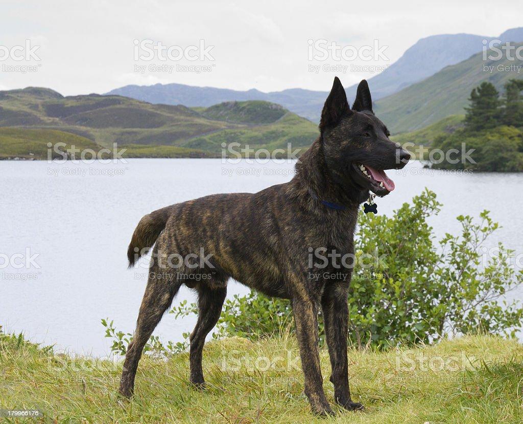 Lucky dog! royalty-free stock photo
