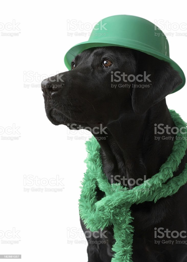 Lucky Dog royalty-free stock photo