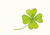 Lucky four leaved clover