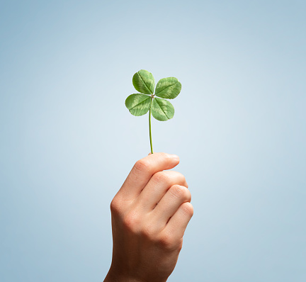 Female hand holding four leaves clover on blue background