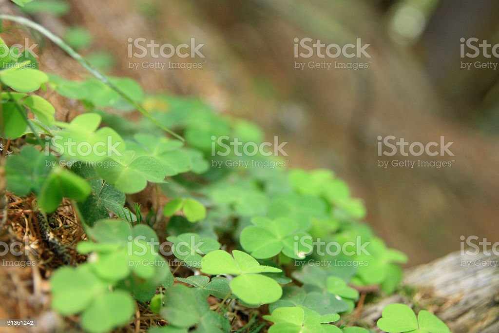 Lucky! royalty-free stock photo