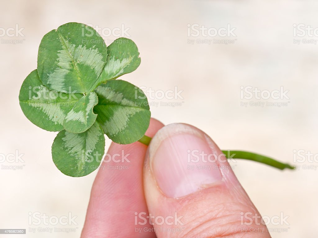 Lucky six leaf clover. Genetic mutation in nature. stock photo