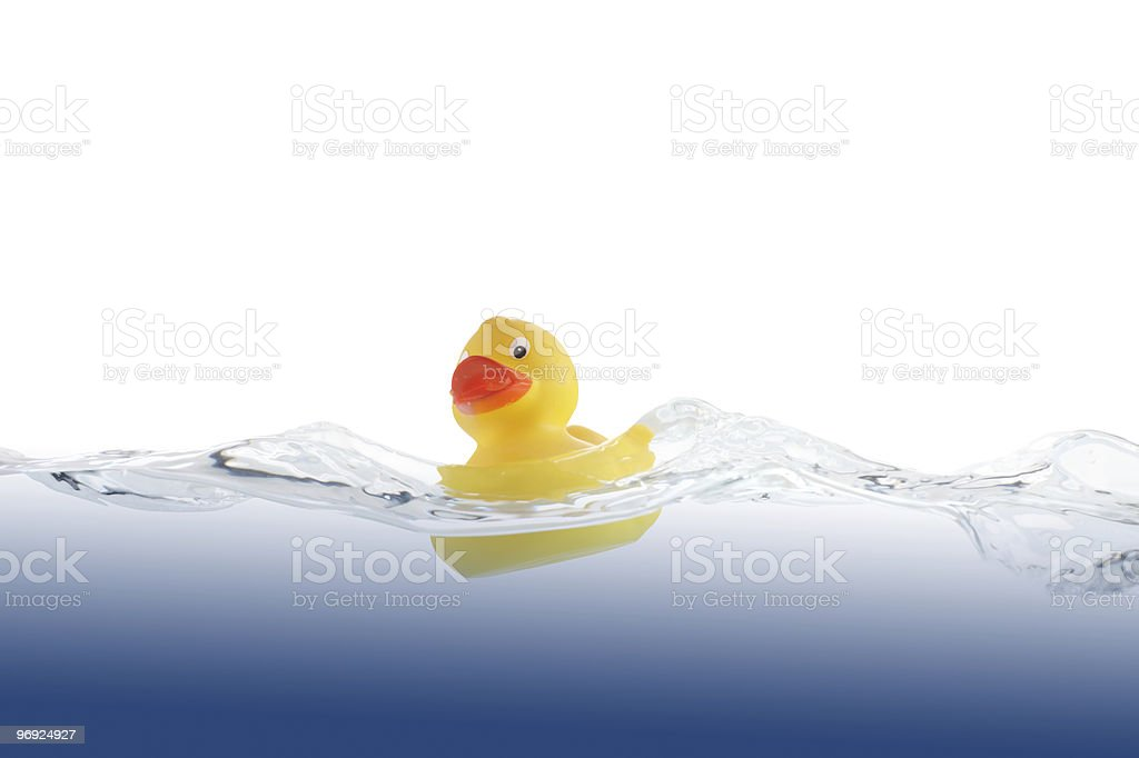 Lucky Swimming Duckling royalty-free stock photo