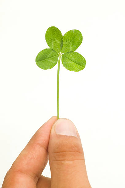 Lucky you! Hand with 4 leaf clover stock photo