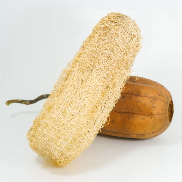 Luffa gommage sur fond blanc. - Photo