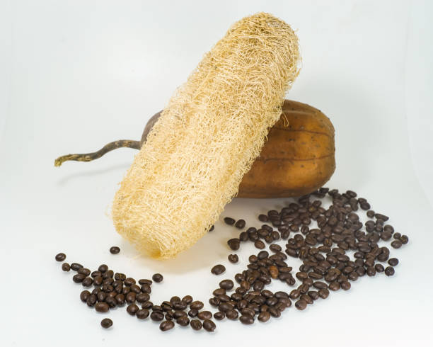 Luffa gommage aux grains de café sur fond blanc. - Photo