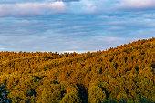 Luftbildaufnahme von Baumgipfel eines Waldgebiets im Schein der Abendsonne