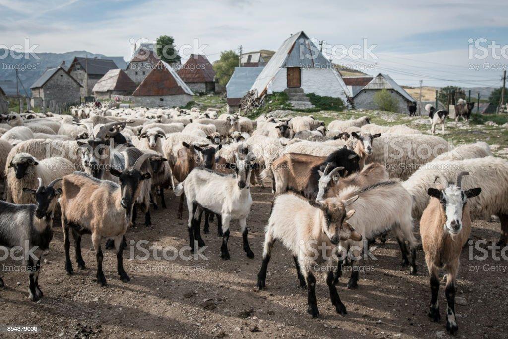 Lukomir traditional highlander Bosnian village in high mountains. stock photo
