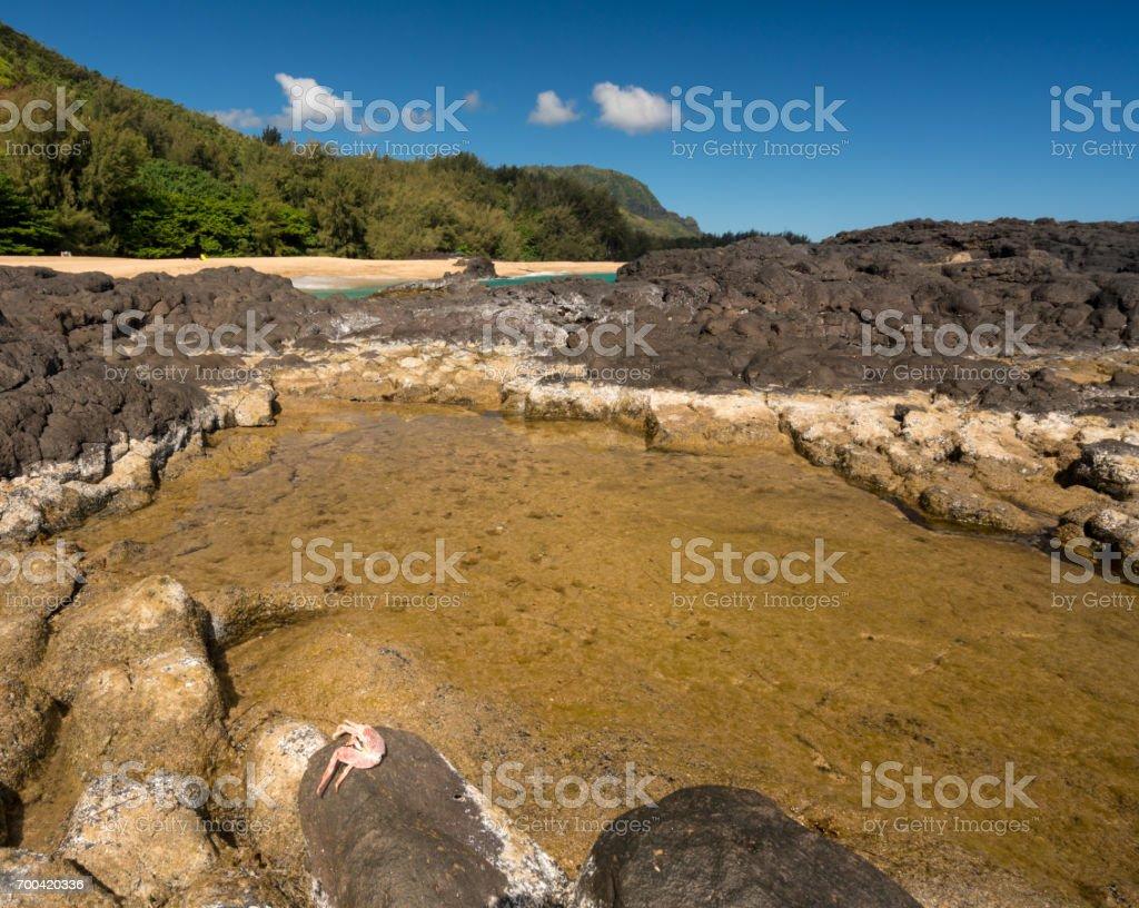 Lumahai Beach Kauai with rocks and crab stock photo
