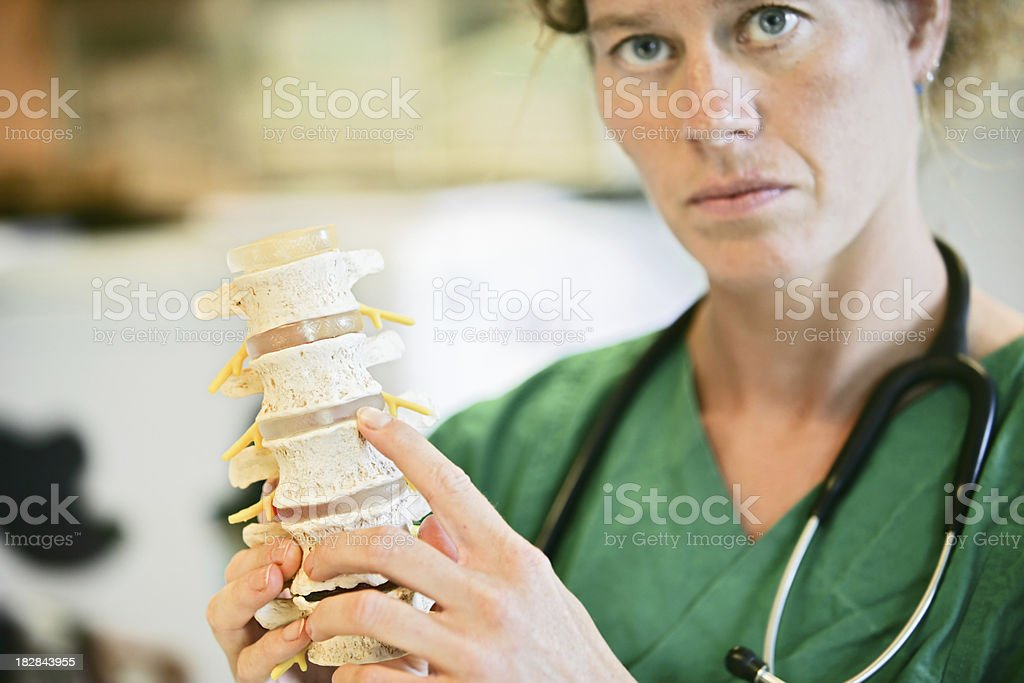 Lumbal spine stock photo
