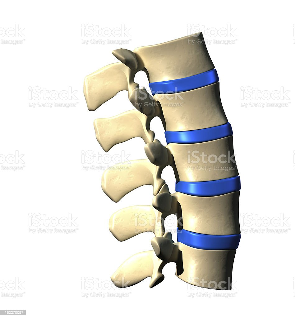Lumbar Spine - Lateral Side view royalty-free stock photo