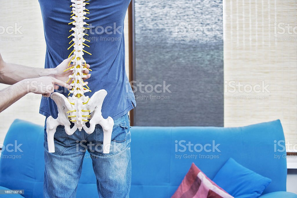 Typical location of lumbar pain. Artificial model of a human spine....