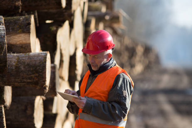 Lumber engineer looking at tablet Portrait of mature engineer working on tablet beside tree trunks forester stock pictures, royalty-free photos & images