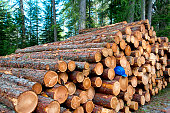 Lumber industry forest