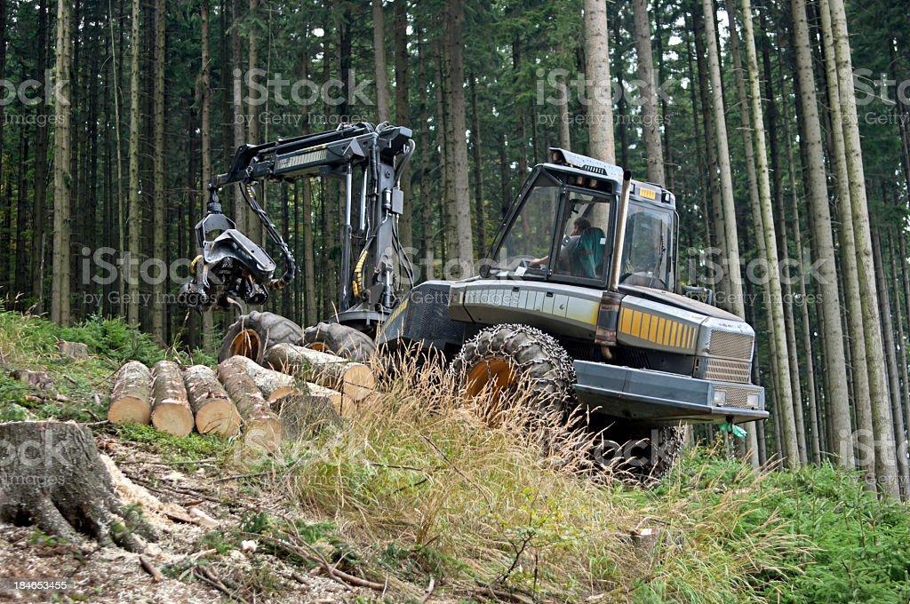 Lumber industry - harvesting royalty-free stock photo