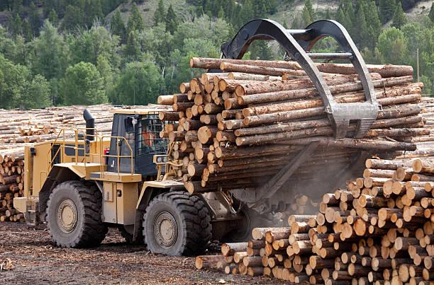 industria forestale - industria forestale foto e immagini stock