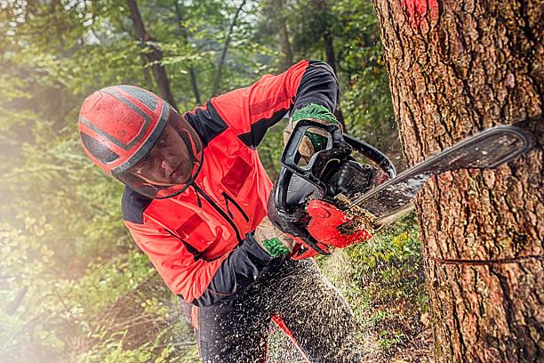 tagliaboschi al lavoro - industria forestale foto e immagini stock