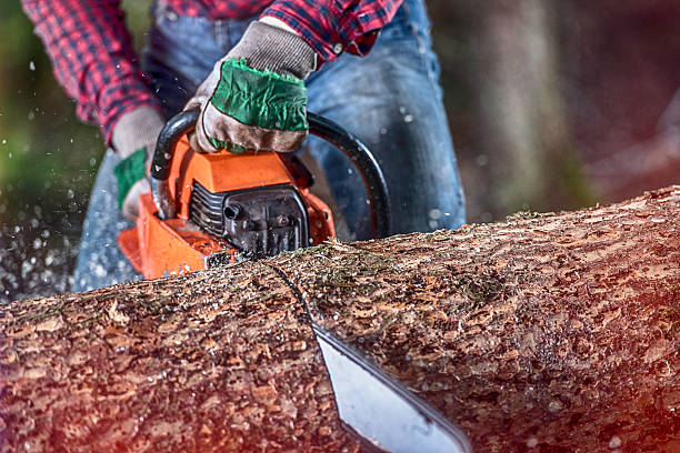 lumberjack at work - chainsaw stock photos and pictures