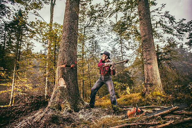 Lumberjack at work Forester using axe while cutting tree in forest. lumberjack stock pictures, royalty-free photos & images