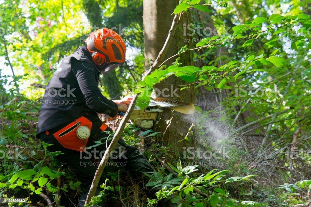 Lumberjack cutting a tree in a extreme terrain