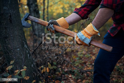 Close up of lumberjack with his axe cutting down a tree in the woods