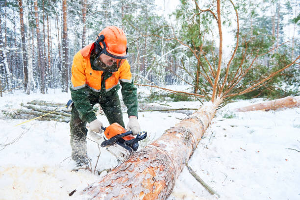lumberjack cutting tree in snow winter forest - chainsaw stock photos and pictures