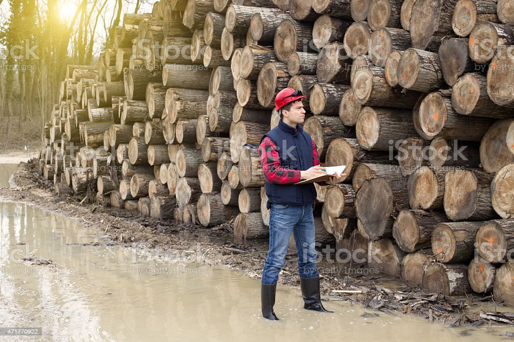 Lumberjack in forest stock photo